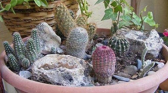 Композиция из кактусов своими руками