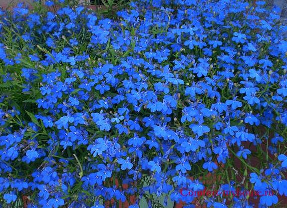 синий цвет (9)