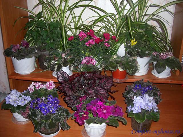 Домашние цветы узнать по фото