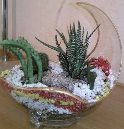 kompozicii iz kaktusov