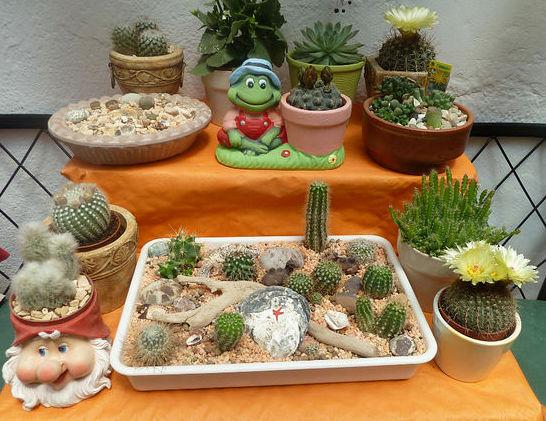 posuda dlja kaktusov