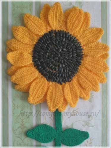 cvetok podsolnuh krjuchkom s semechkami