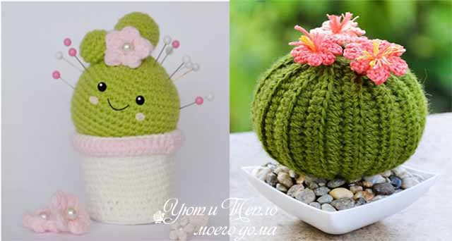 igolnicy kaktusy
