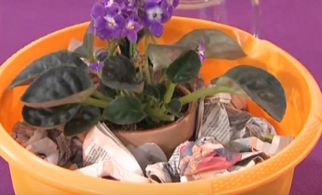 poliv czvetov v tazu