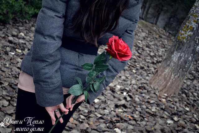 roza v podarok