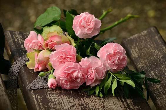 rozy dlya devushki